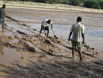 Preparing a firm path at one of three river crossings, Somaliland overland desert route.