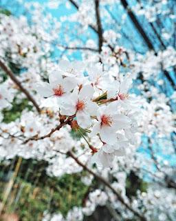 arti bunga berwarna putih