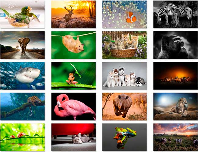 100 Animal HD Papéis de Parede Preview 05 por Saltaalavista Blog