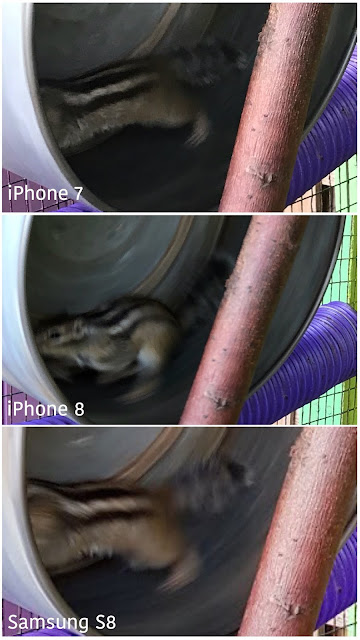 3 images of a chipmunk running on a metal wheel