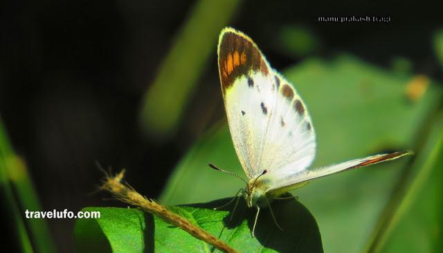 butterfly sanjay van delhi