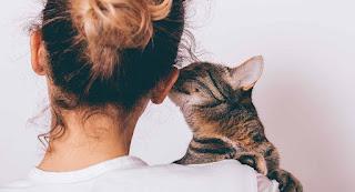 ¿Los gatos nos aman? Crítica al estudio del reconocimiento vocal en gatos