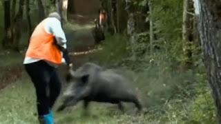 Warga Tewas Diseruduk Babi Hutan Saat Sedang Bekerja di Sawah