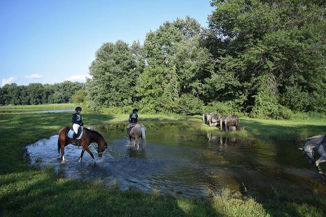 caballos con jinetes en charco en el campo