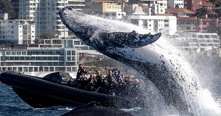 Giant Whale Jumps Out Of Sea Right Next To Fishing Boat ( Video)