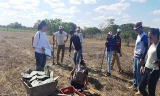 Estudantes de Biologia do CES/UFCG realizam experimento com variedades de palma forrageira em Jaçanã