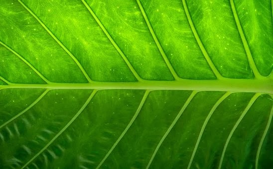 ورقة ، طبيعة ، خشب ، أخضر ، ورقة ، هواليوب ، مجردة ، نبات ، خلفية