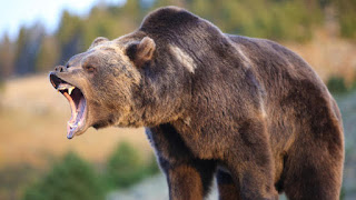thị trường con gấu trong chứng khoán