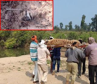 संजय गांधी नेशनल पार्क से लापता तीन शावकों का सुराग नहीं,तलाश जारी