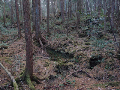 غابة أوكيغاهارا في اليابان