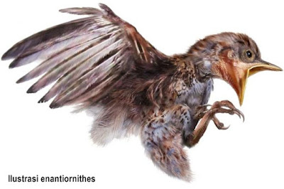 Fosil Burung Purba ditemukan Terjebak dalam Amber