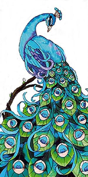 Tavuskuşu Boyama Renkleri Gazetesujin