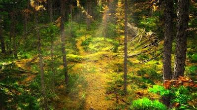 Konsep Kelestarian Hutan adalah suatu rancangan pengelolaan kayu di dalam hutan dengan tujuan pelestarian berdasarkan prinsip asas lestari.