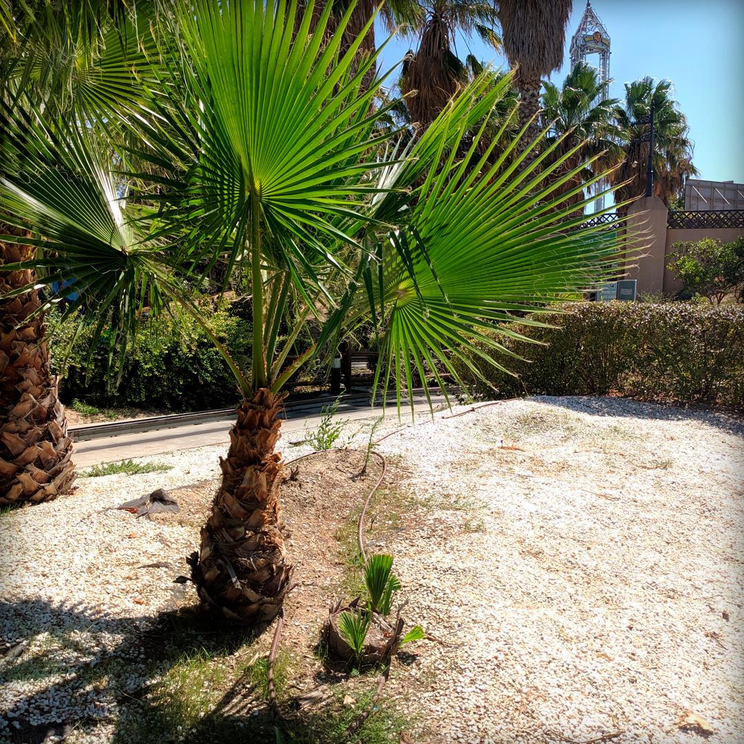Paisaje palmera