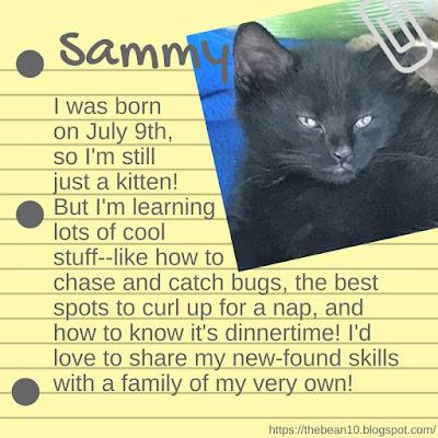 http://www.adoptapet.com/pet/19056220-rochester-new-york-kitten