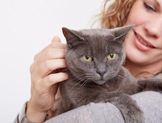 smilebox producto para gatos