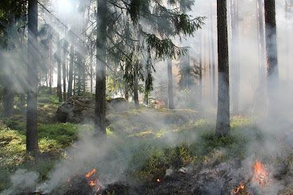 Kebakaran Hutan Di Kalimantan Tengah, Yang Mengancam Satwa