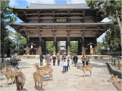 ฝูงกวางบริเวณวัดโทไดจิ (Todaiji Temple)