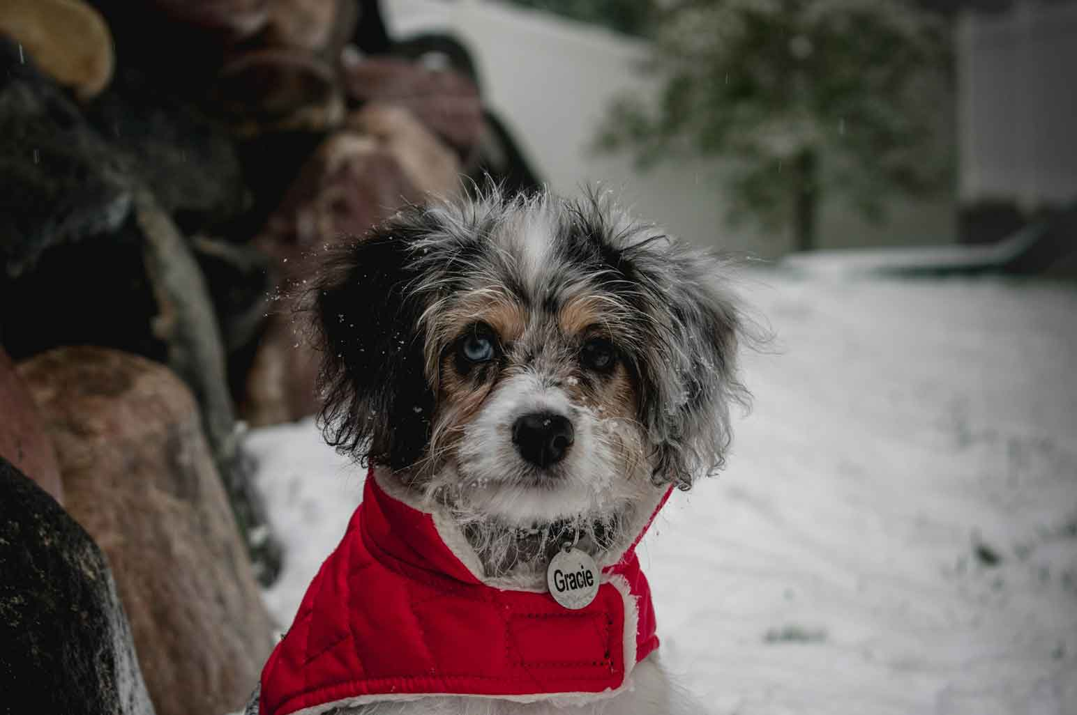 Why Canada Pooch Make Great Gifts For Pets