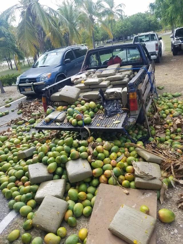 Miembros del Ejército ocupan oculto en camioneta 701 libras de un vegetal presumiblemente Marihuana