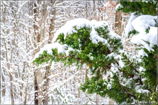 Tháng 12 tuyết rơi