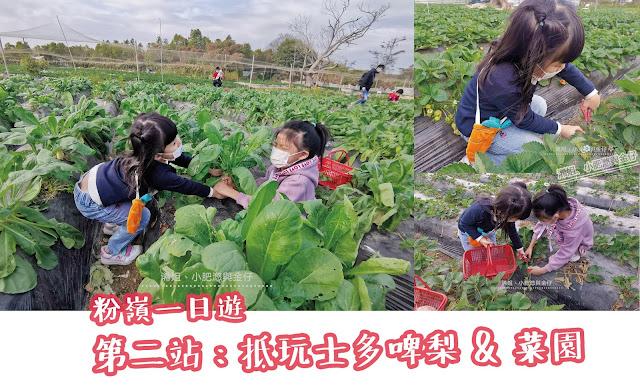 粉嶺一日遊 – 第二站老徐士多啤梨農莊(老徐特大農場)