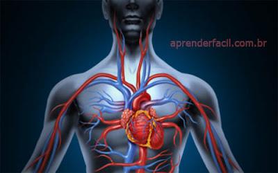 Sangue venoso e arterial: qual a diferença?