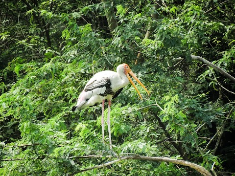 Photography of Stork bird long neck & feathered creatures by Gaurav Singh