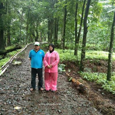 bersama pak iwan di pertanian daun pohpohan sumber pangan dari hutan
