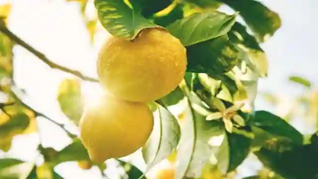 معجون الليمون لتبييض الاسنان والحصول على إبتسامة مبهرة .