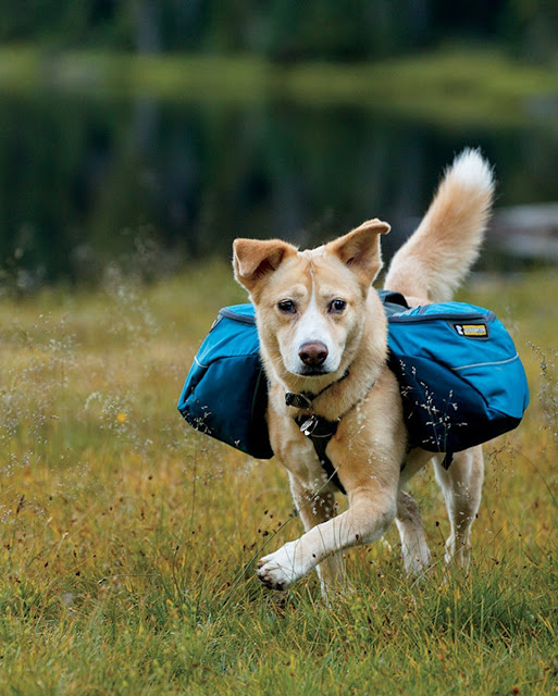 Fully loaded dog backpack in pacific blue