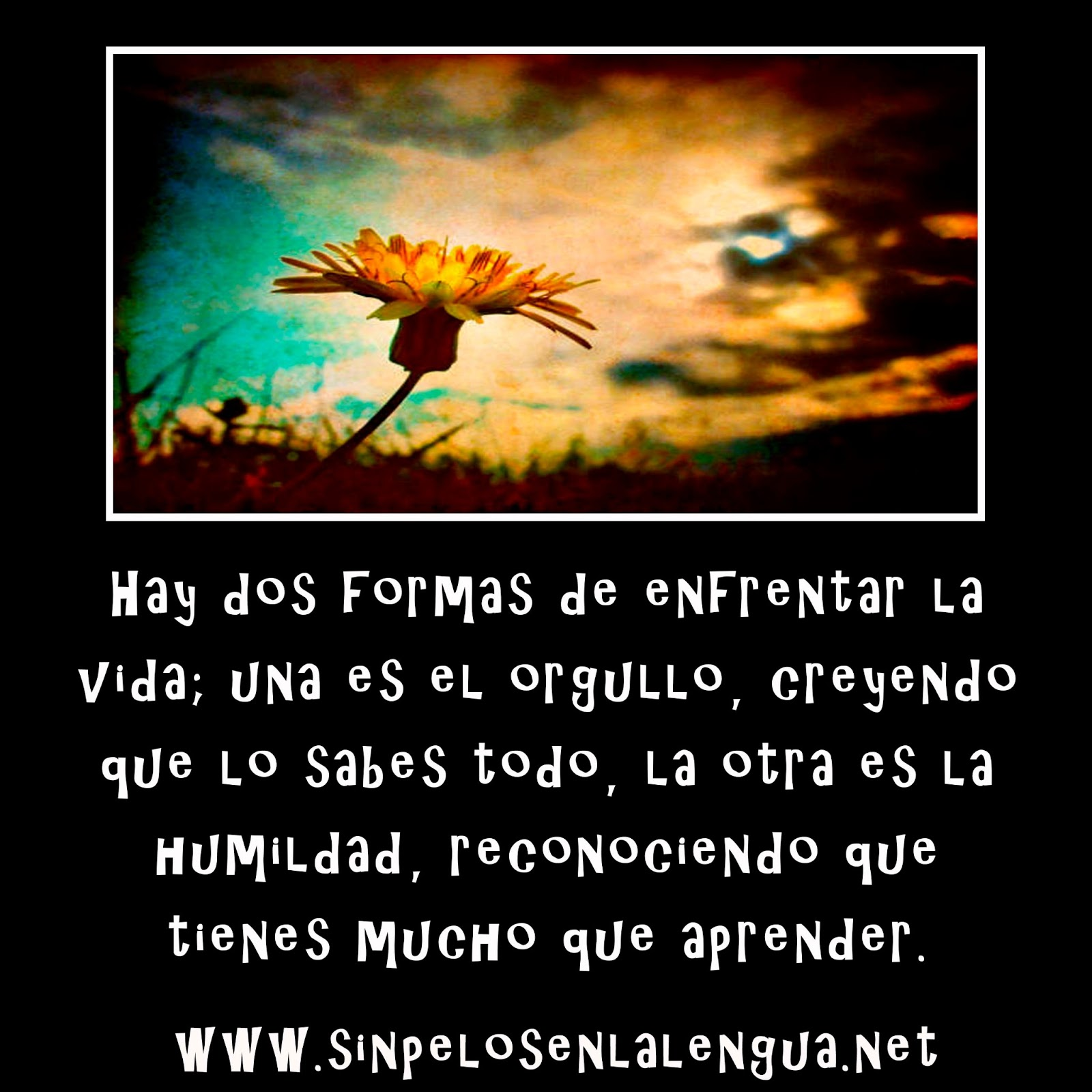 Frases Bonitas En Portugues Traducidas Al Espaãol Gong Shim P