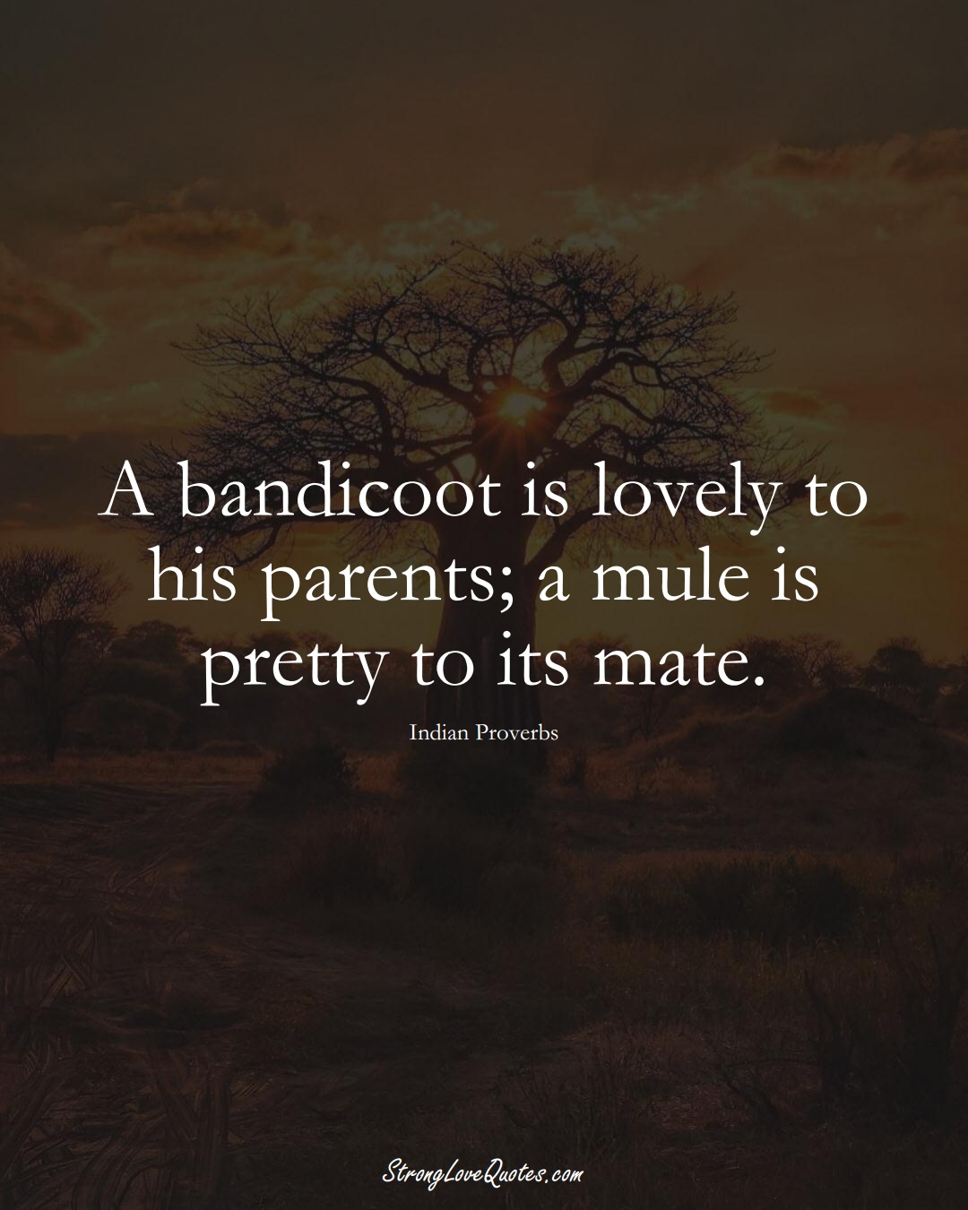 A bandicoot is lovely to his parents; a mule is pretty to its mate. (Indian Sayings);  #AsianSayings