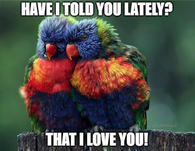 funny memes about love with birds parrot