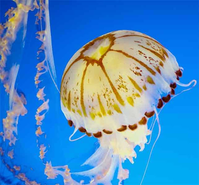 meduse-illuminatrice-ne-dors-jamais