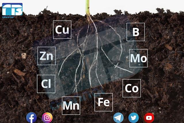 العناصر المغذية الصغرى  في التربة وأهميتها للنباتات