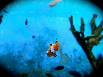 Nemo in Coex Aquarium Seoul