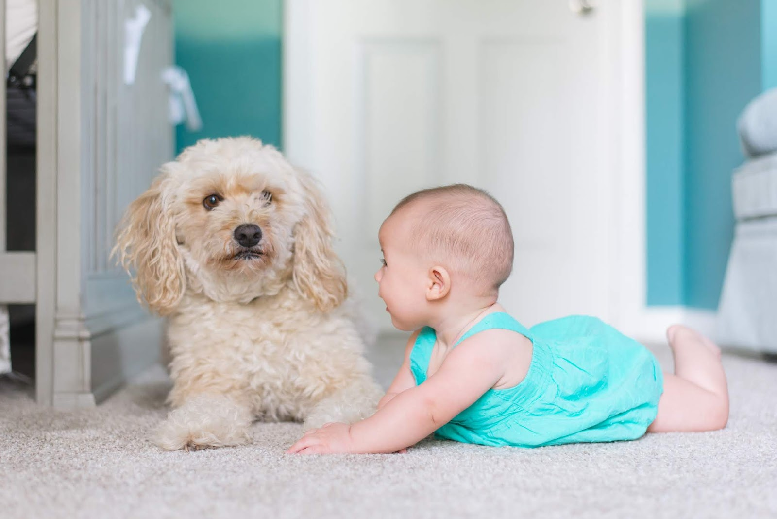 Child and dog on carpet floor
