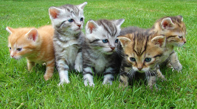auspicious signs, cat and kittens, cats gives auspicious signs,