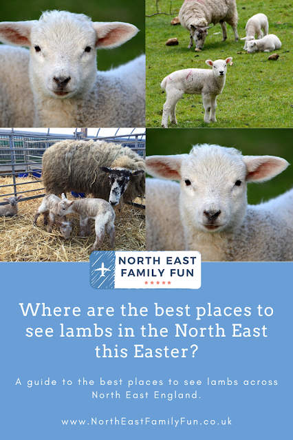 Where are the best places to see lambs in the North East this Easter?