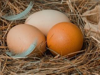 Perbedaan Manfaat 2 Macam Telur Ayam   PDF
