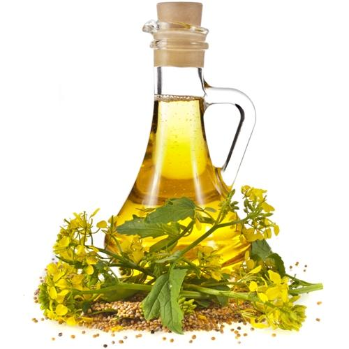 Benefits of mustard oil for the body, hair and skin