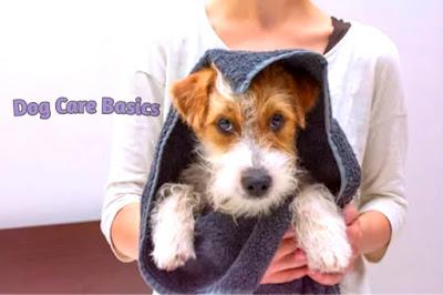 Dog Care Basics