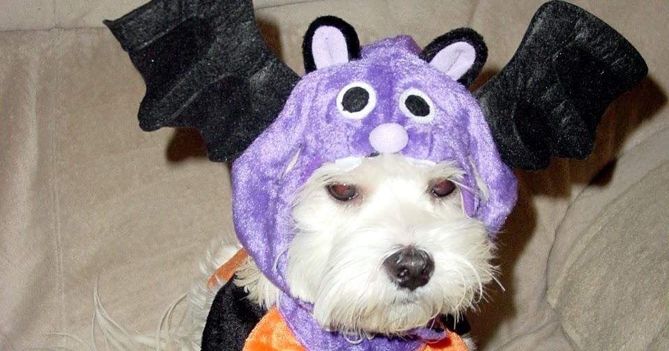 lost puppy costume meningrey lost dog halloween