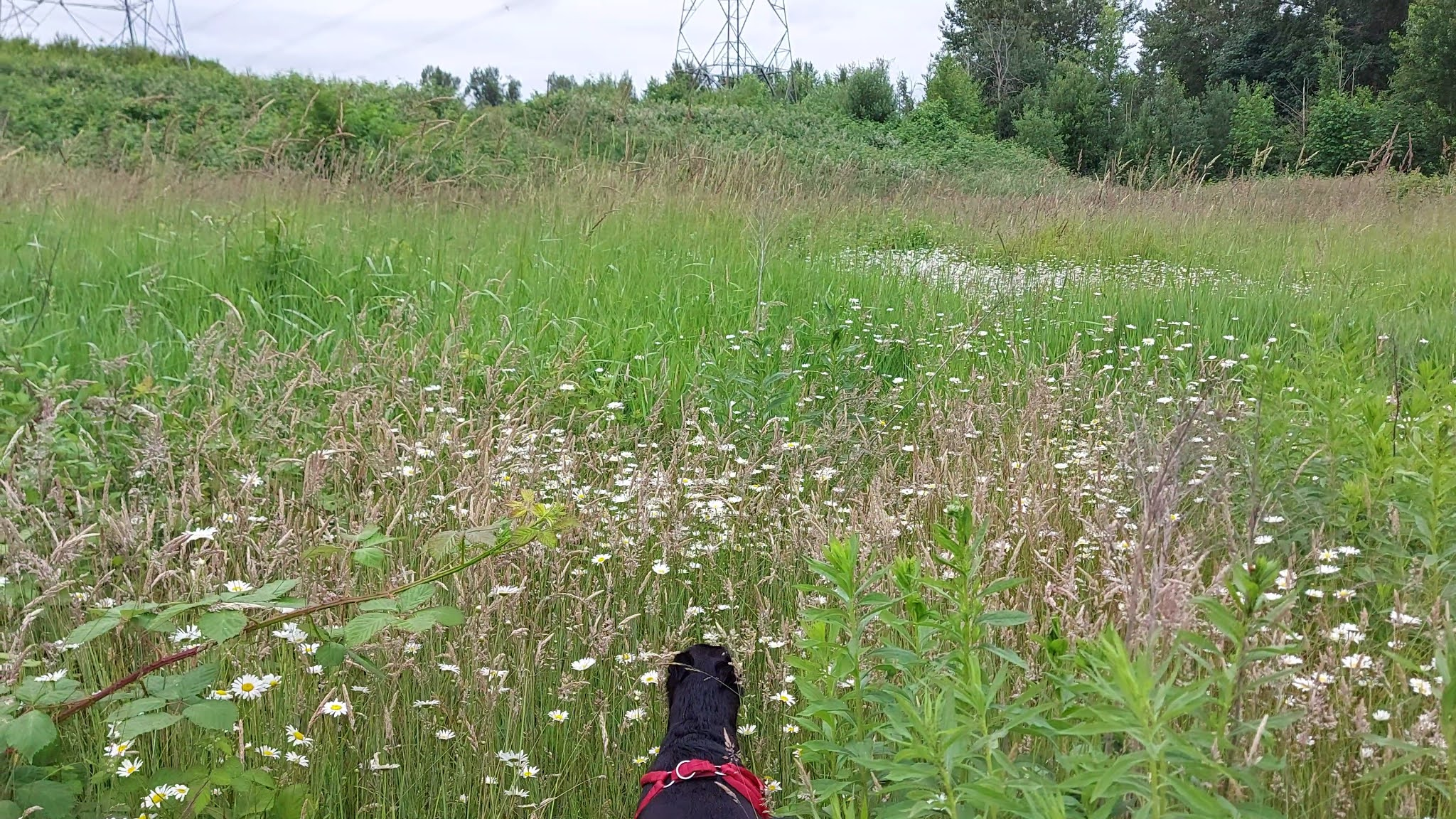 Dog in the fields