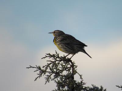 Lower Klamath National Wildlife Refuge