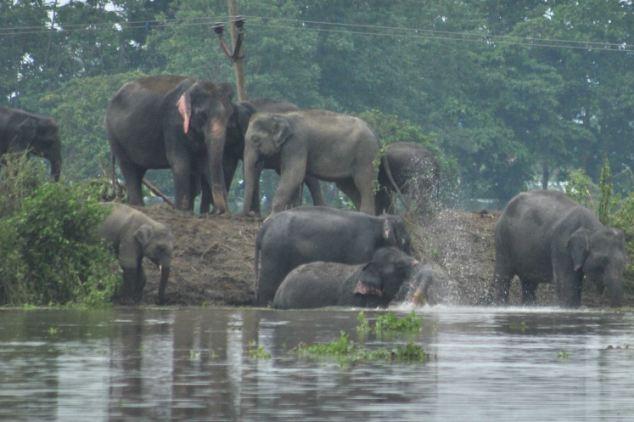 The Animal Zone June 2012-4270