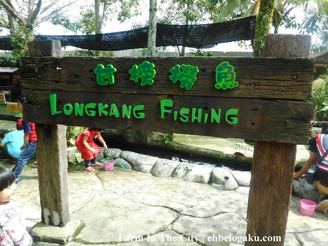 longkang fish