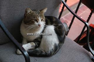Kucing di depan Hotel La Villa, Taksim, Istanbul