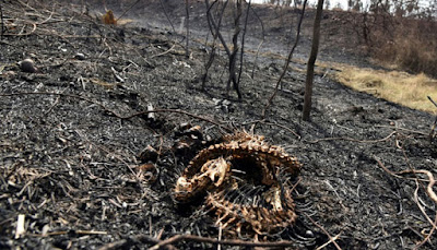 More than 2 million animals die in forest fires in Bolivia